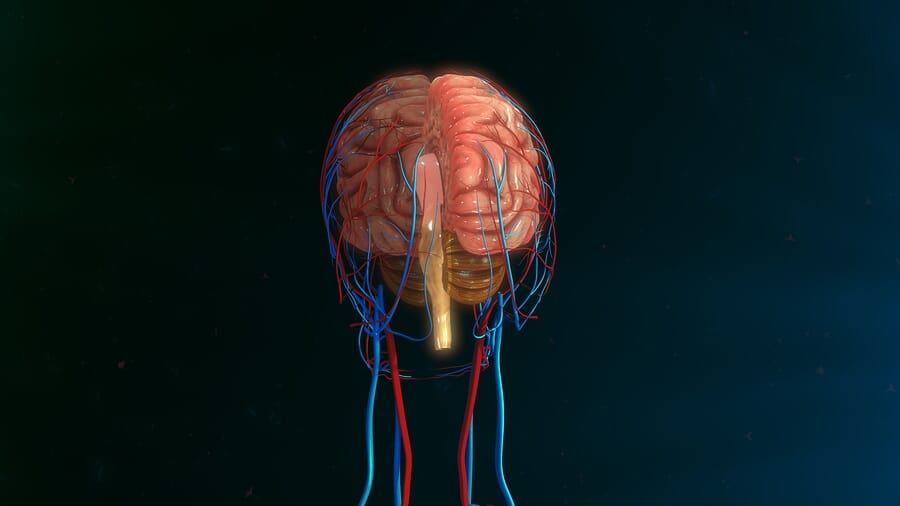 How to Grow: Central Nervous System